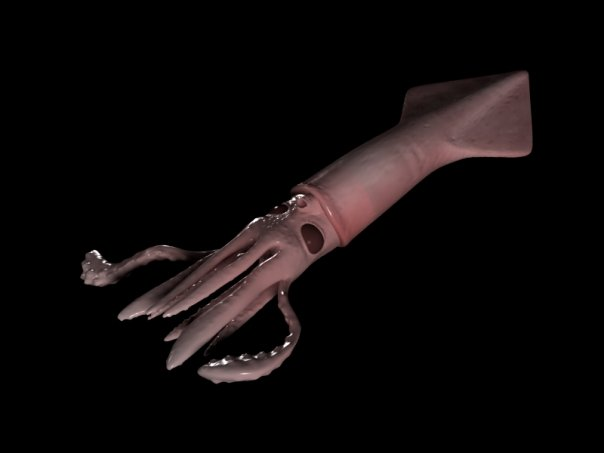 Bioedge Squid